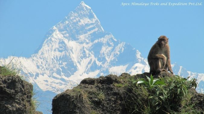 Annapurna Sanctuary 13 Days Trek