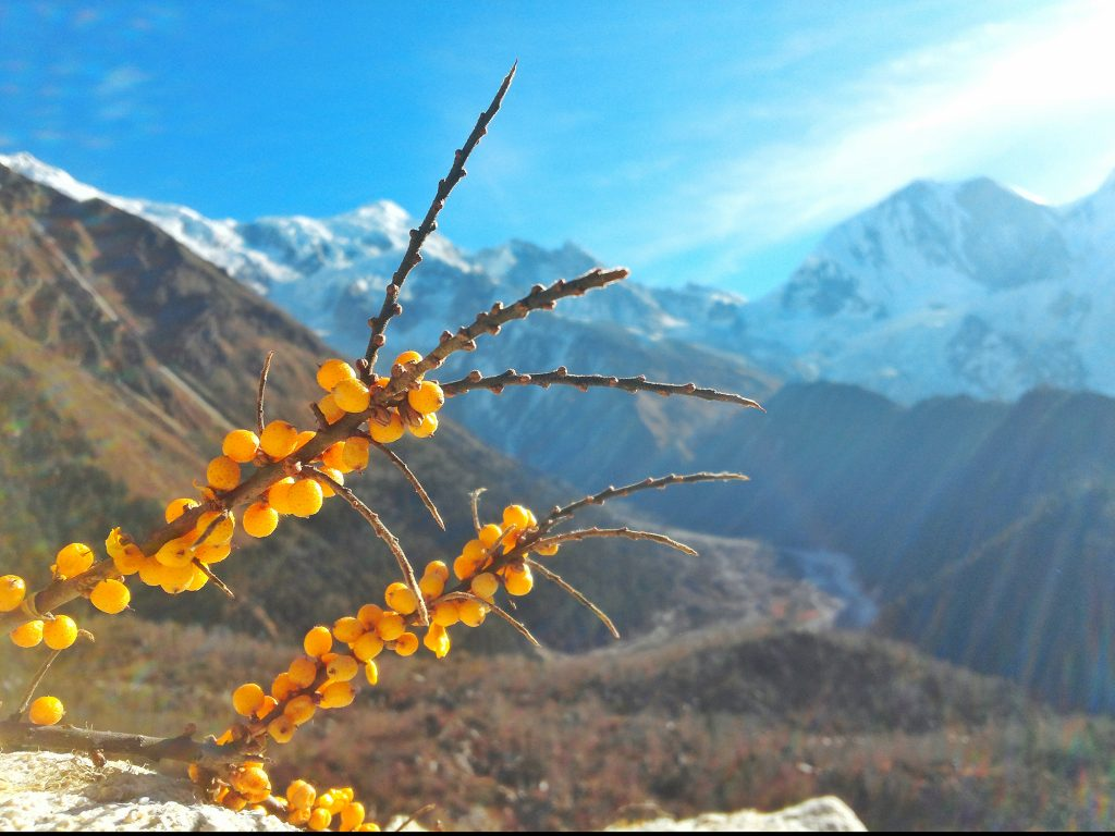 Manaslu Circuit  19 Days Trek
